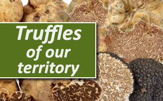 Truffle of our Territory